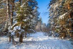 Winterlandschaft mit dem Wald und einem Fußweg Stockfotos