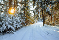 Winterlandschaft mit dem Wald und einer Straße Lizenzfreie Stockfotos