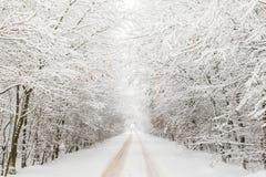 Winterlandschaft mit der Straße umgeben durch Bäume Stockbilder