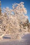 Winterlandschaft mit einem Baum stockbild