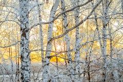 Winterlandschaft mit einem Sonnenuntergang im Wald Stockfotos