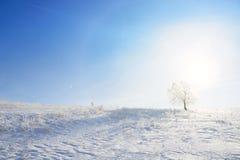 Winterlandschaft mit einsamem Baum- und Schneefeld Stockfotos