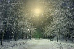 Winterlandschaft mit eisigem Laubbaum in der Nacht Lizenzfreie Stockfotografie