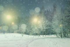 Winterlandschaft mit eisigem Laubbaum in der Nacht Stockbilder