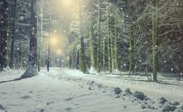 Winterlandschaft mit eisigem Laubbaum in der Nacht Lizenzfreies Stockbild