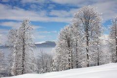 Winterlandschaft mit eisigen Bäumen Stockbild