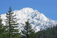 Winterlandschaft mit Fichten und Bergen stockbilder
