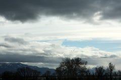 Winterlandschaft mit Fliegenschwänen Stockbilder