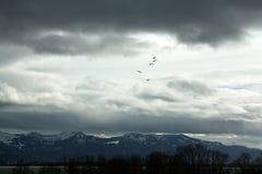 Winterlandschaft mit Fliegenschwänen Stockfotos