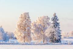 Winterlandschaft mit Frost auf den Bäumen Lizenzfreies Stockbild