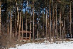 Winterlandschaft mit hölzernem Gazebo unter Kiefern Lizenzfreies Stockfoto
