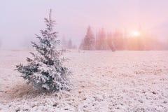 Winterlandschaft mit Nebel Stockfotos