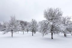 Winterlandschaft mit Obstbäumen lizenzfreie stockfotografie