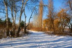 Winterlandschaft mit Pappeln und Spur im Schnee Stockbild