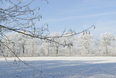 Winterlandschaft mit Reif lizenzfreie stockfotografie