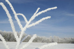 Winterlandschaft mit Reif stockbilder