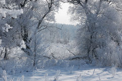 Winterlandschaft mit schönen weißen Bäumen im Wald Stockfoto