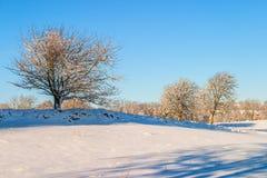 Winterlandschaft mit Schnee Lizenzfreie Stockbilder
