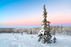 Winterlandschaft mit Schnee deckte Bäume ab Stockfoto