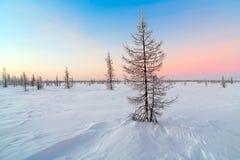 Winterlandschaft mit Schnee deckte Bäume ab Stockbild