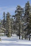 Winterlandschaft mit Schnee deckte Bäume ab Lizenzfreie Stockfotografie
