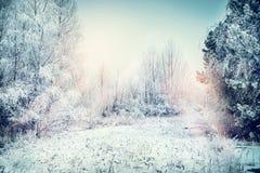 Winterlandschaft mit Schnee, Feld, Bäumen und gefrorenen Gräsern Stockbild