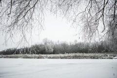 Winterlandschaft mit Schnee und Bäumen Stockfoto