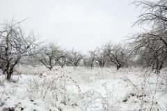 Winterlandschaft mit Schnee und Bäumen Stockbilder