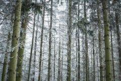 Winterlandschaft mit Schnee und Bäumen Stockfotografie