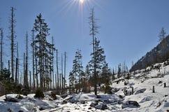 Winterlandschaft mit Schnee und Bäumen in den Bergen Lizenzfreie Stockfotos