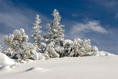Winterlandschaft mit schneebedecktem Baum stockbild