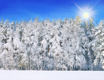 Winterlandschaft mit schneebedeckten Bäumen Lizenzfreie Stockfotografie