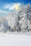 Winterlandschaft mit schneebedeckten Bäumen Stockfotos
