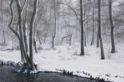 Winterlandschaft mit Schneefällen im Wald nahe dem Fluss Stockbild
