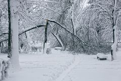 Winterlandschaft mit trees3 Stockfotografie