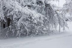 Winterlandschaft mit trees4 Stockbilder