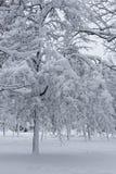Winterlandschaft mit trees5 Lizenzfreies Stockfoto