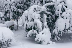 Winterlandschaft mit trees6 Stockbilder