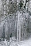 Winterlandschaft mit trees7 Stockfotos