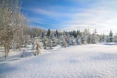 Winterlandschaft mit Wald, Schnee und blauem Himmel Lizenzfreies Stockbild