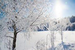 Winterlandschaft mit Wald, Schnee und blauem Himmel Stockfotografie