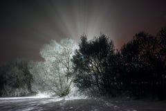 Winterlandschaft nachts Stockbilder