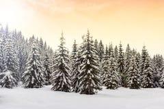 Winterlandschaft nahe Vogel-Skimitte Lizenzfreie Stockfotos