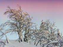 Winterlandschaft nahe Vogel-Skimitte Stockbild