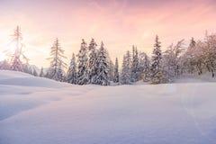 Winterlandschaft nahe Vogel-Skimitte Stockbilder