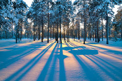 Winterlandschaft. Sonnenuntergang. Lizenzfreie Stockfotos