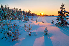 Winterlandschaft. Sonnenuntergang. Stockbild