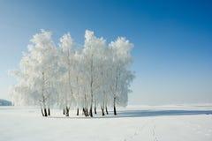 Winterlandschaft und -bäume Stockfotos