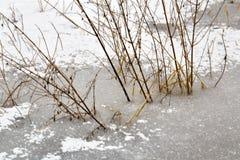 Winterlandschaft und -bäume lizenzfreies stockfoto