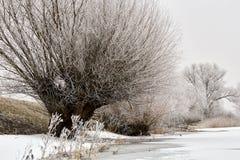 Winterlandschaft und -bäume lizenzfreie stockfotografie